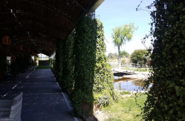 terraza-y-estanque-1